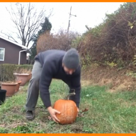 Smashin Pumpkins it's Stress Busting Time!